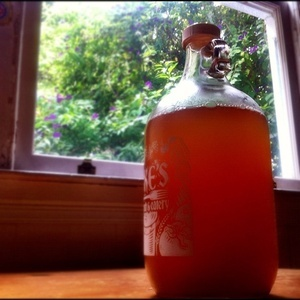 Kombucha home brew